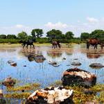 giara-di-gesturi_cavallini_wild-horses_ND3_9685