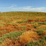 meadow in Mal di Ventre island